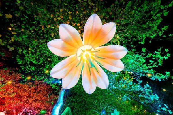 printed 3m lily