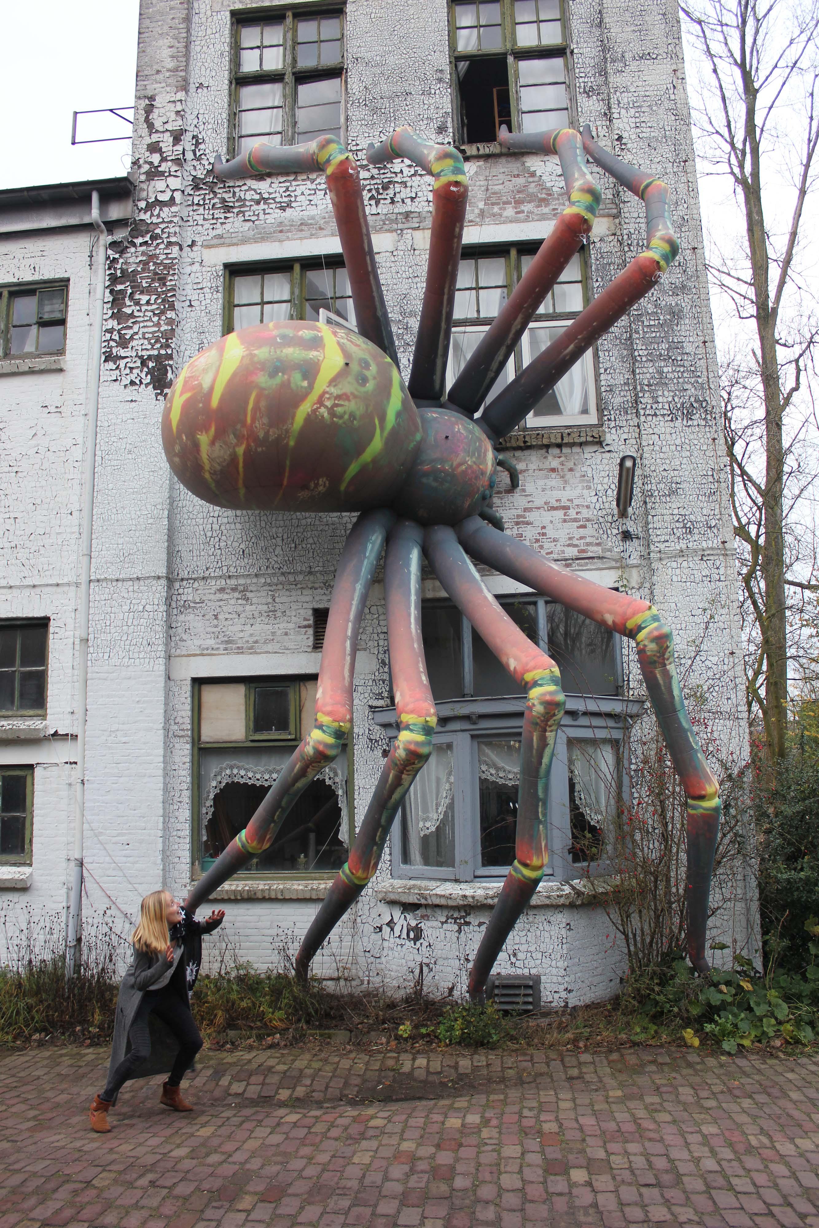 Rentals-Spider-11